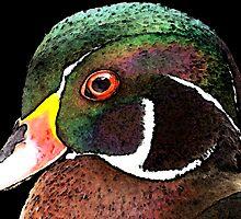 Wood Duck Art - Royalty by Sharon Cummings