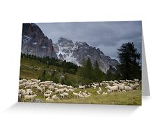 Sheep below Rif Cinque Torre, Dolomites, Italy Greeting Card