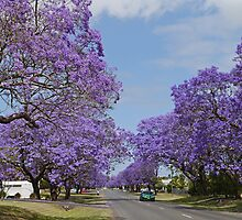 A Jacaranda Avenue by Graeme  Hyde