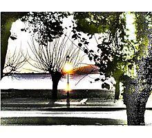 surrealistic arboreal morning Photographic Print