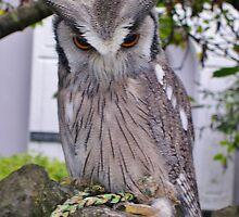 Owl by lezvee
