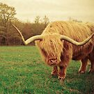 Portrait of a Scottish Highland Steer by Olivia Joy StClaire