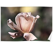 """Julia's Rose..."" Poster"
