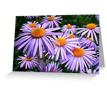 Aster Flowers, Petals, Blossoms - Purple Orange Greeting Card