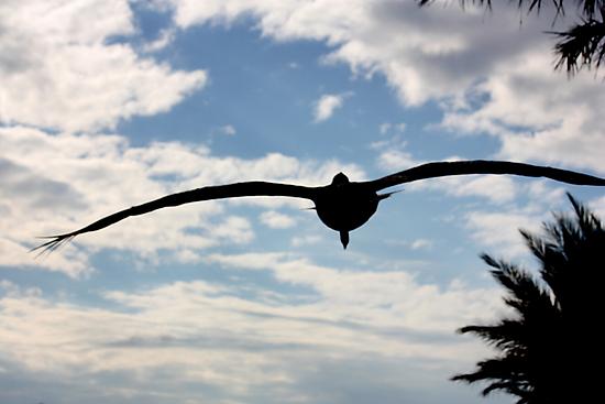 Skyward by AuntDot