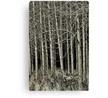 Cottonwood Canvas Print
