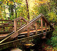 Wooden Bridge In A Wooded Area by Jane Neill-Hancock