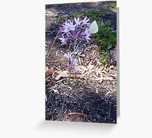 The Cabbage Moth Five - 09 11 12 Greeting Card