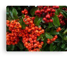Christmas Berries Canvas Print