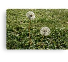 Blow Ball Canvas Print