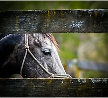 The Blue Mare Photographic Print