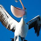 Pelican eating fish by JayW