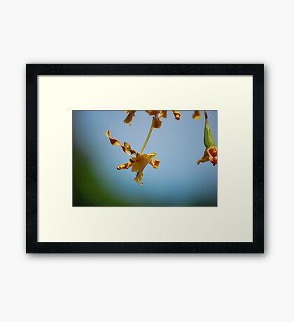 Twisted Orchid #2 Framed Print