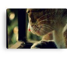 Pensive Feline Canvas Print