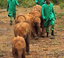 Baby Elephant Walk by Carole-Anne