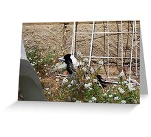 Magpie - 07 11 12 -  Five Greeting Card