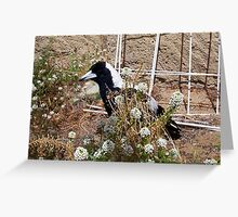 Magpie - 07 11 12 -  Six Greeting Card