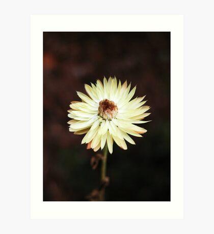 flower # 6 Art Print