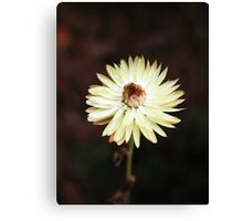 flower # 6 Canvas Print