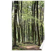 Path Through The Wood Poster