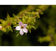 flower # 10 Photographic Print