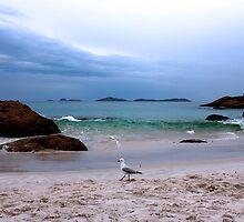 Squeaky Beach by Noeline R