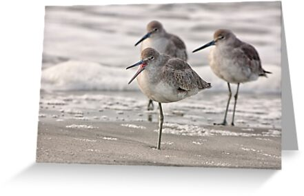 Shore Bird Yoga, Ocean Isle Beach, NC by Denise Worden