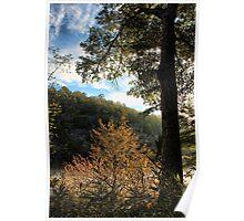 Backlit Riverside Trees Poster