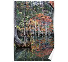 The Trees Of Beavers Bend Poster