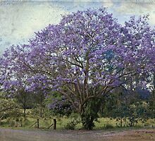 The Jacaranda Tree by Sea-Change