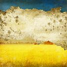 yellow field by naphotos