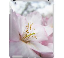 Cherry Blossoms 9 iPad Case/Skin