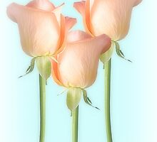 Simply Roses by Christine Lake