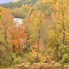 Autumn in the Highlands by Steve
