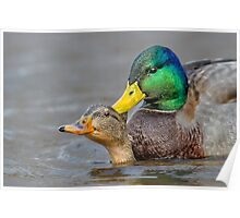 What's Up Duck! Poster