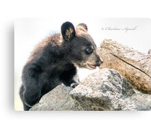 Little Cub Canvas Print