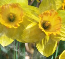 Spring Daffodils Watercolor Art Sticker