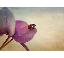 Ladybird. Photographic Print