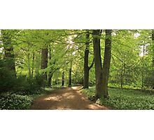 Forest Path Cumbria Photographic Print