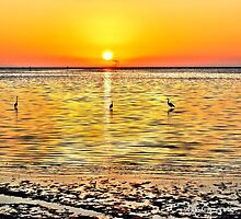 Herons at Sunrise (HDR) by Jeff Ore