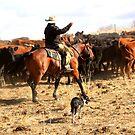 Cattleman by Jessie Miller/Lehto