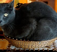 Cat In A Basket by Loree McComb