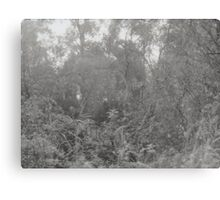 Analogue photograph of the woods Canvas Print