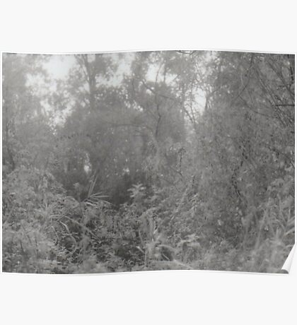 Analogue photograph of the woods Poster
