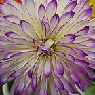 Dahlia #21 by Sarah Curtiss