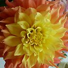 Dahlia #22 by Sarah Curtiss