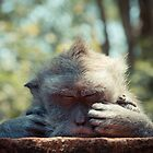 Sleeping monkey by halans