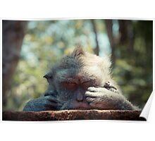 Sleeping monkey Poster