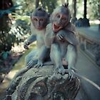 Laughing monkey by halans