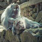Grooming monkeys by halans